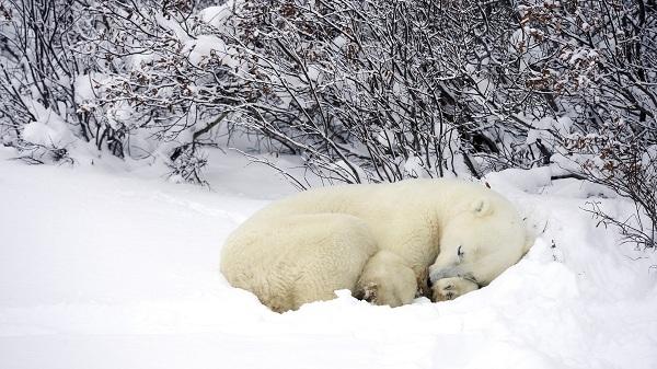 خواب زمستانی (مستند)